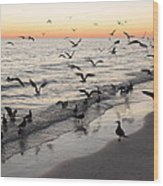Seagulls Feasting Wood Print