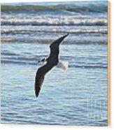 Seagull Flight Wood Print