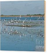 Seagull Flock Wood Print