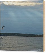 Seagull Flying Over Niles Beach Wood Print