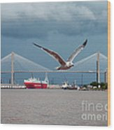 Seagull Foto Bombs Image Wood Print