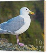 Seagull Heceta Head - Oregon Wood Print
