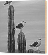 Seagull Hierarchy Wood Print