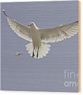 Seagull Hovering Wood Print by Lesley Rigg