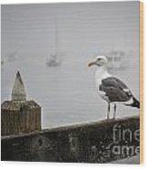 Seagull In Fog 1 Wood Print