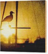 Seagull In Harbor Sunset Wood Print