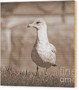 Seagull In Sephia Wood Print