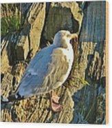 Seagull In Shadow Wood Print