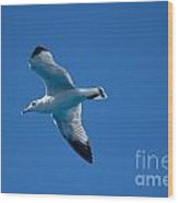 Seagull In The Blue Sky Wood Print