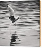 Seagull Landing On Lake Wood Print