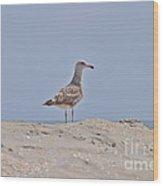 Seagull N Sand  Wood Print