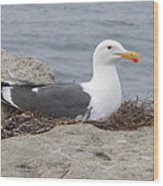 Seagull Nest Wood Print