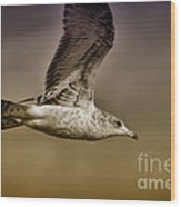 Seagull Oil Wood Print by Deborah Benoit