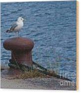 Seagull On A Bollard  Wood Print