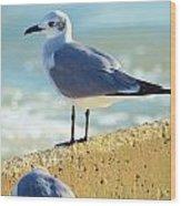 Seagull On Sea Wall Wood Print