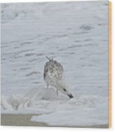Seagull On The Beach Wood Print