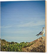 Seagull On The Rock Wood Print by Raimond Klavins