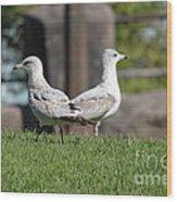 Seagull Opposites Wood Print