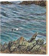 Seagull Over Rocks Wood Print