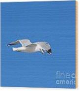 Seagull Patrol Wood Print