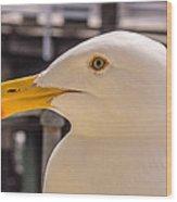 Seagull Profile Wood Print