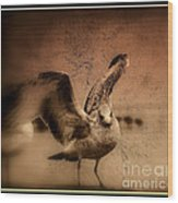 Seagull Ready To Fly Wood Print