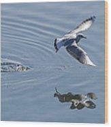 Seagull Reflection Wood Print