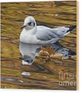 Seagull Resting Among Fall Leaves Wood Print