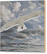 Seagull Wood Print