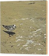 Seagull Scurry  Wood Print