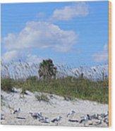 Seagull Siesta Wood Print