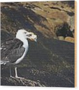 Seagull Snacking  Wood Print