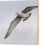 Seagull Soaring Under Pale Blue Sky Wood Print