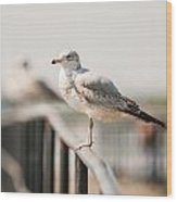 Seagull Standing On Rail Wood Print