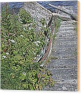 Seagull Steps Guard Island Alaska Wood Print
