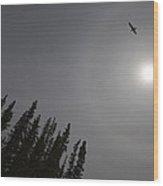 Seagull Sun And Tree Tops Wood Print