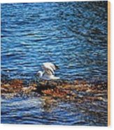 Seagull Wings Lifted Wood Print