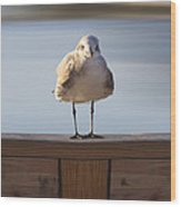 Seagull With An Attitude  Wood Print by Mike McGlothlen