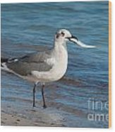 Seagull With Fish 1 Wood Print