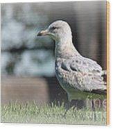 Seagulls 1 Wood Print