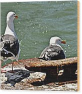 Seagulls Against Rust Wood Print