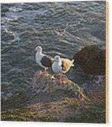 Seagulls Aka Pismo Poopers Wood Print