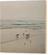 Seagulls And Sandpipers Wood Print
