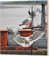 Seagulls Expression Wood Print by Debra  Miller
