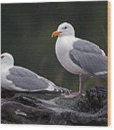 Seagulls Wood Print by Gary Langley