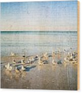 Seagulls Gathering By Sharon Cummigs Wood Print by William Patrick