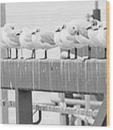 Seagulls In A Row Wood Print
