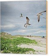 Seagulls In Flight At North Padre Wood Print