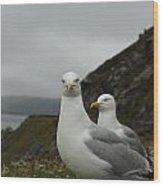 Seagulls In Ireland Wood Print