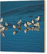 Seagulls On Frozen Lake Wood Print